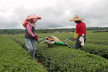 Photo by Mary Lou Heiss © Tea Trekker, all rights reserved